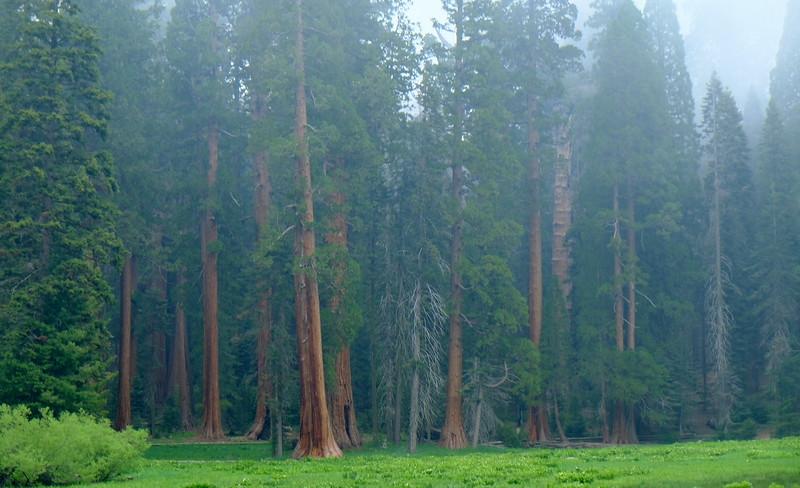 California Day 6 Sequoia 05-30-2017 93.JPG