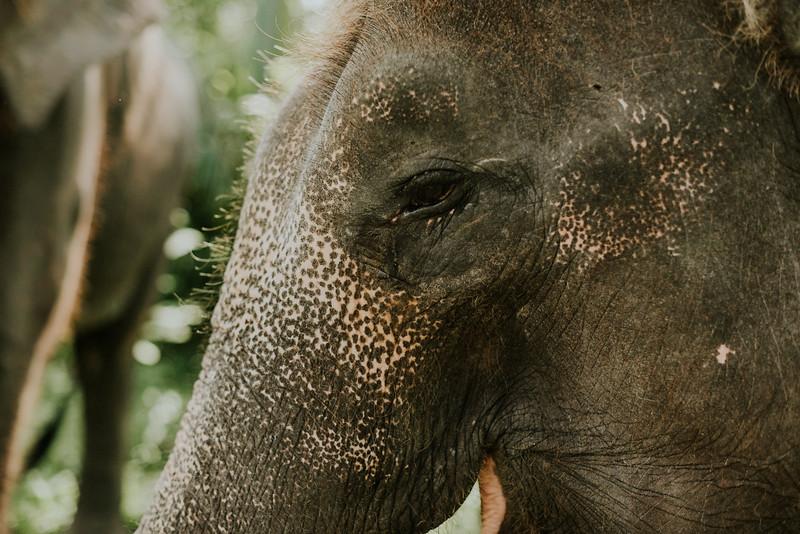 VTV_family_photoshoot_elephants_Bali_ (110).jpg