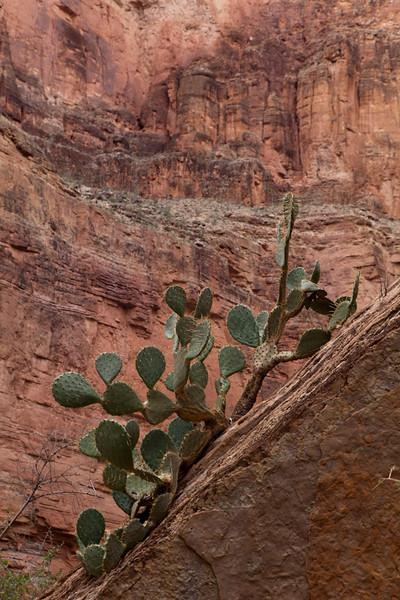 Grand Canyon October-0627.jpg