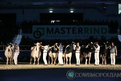 Senior Holstein