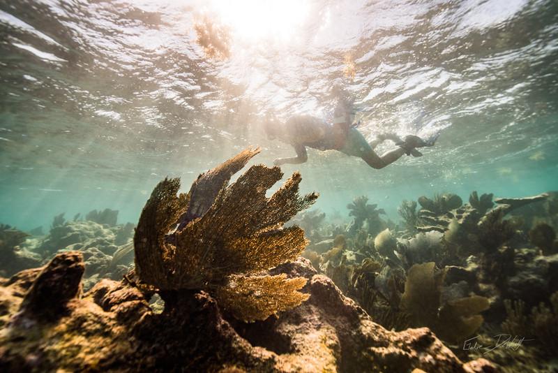 4-2 Snorkeling PDC - Octavian
