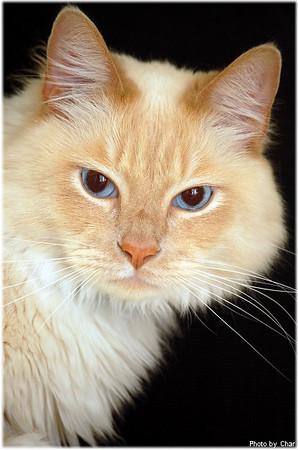 My Cat 2008