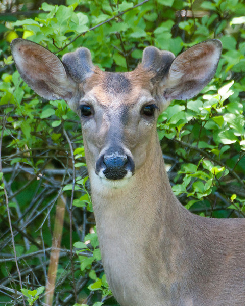 Deer photo... Check. Moving on.