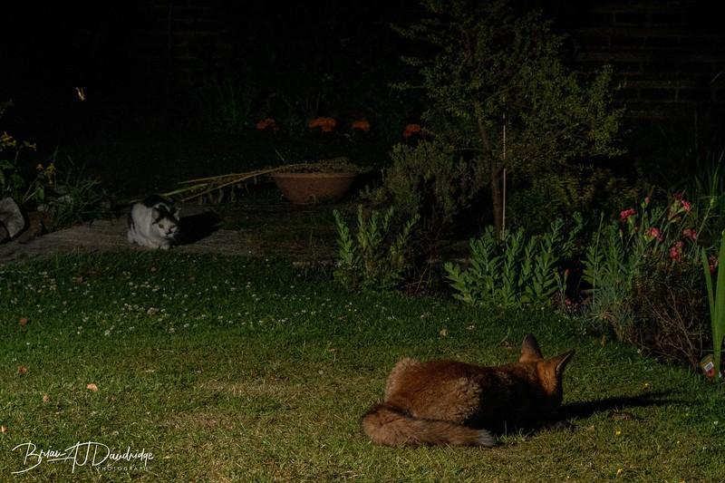 Garden Night Shoot-7280.jpg