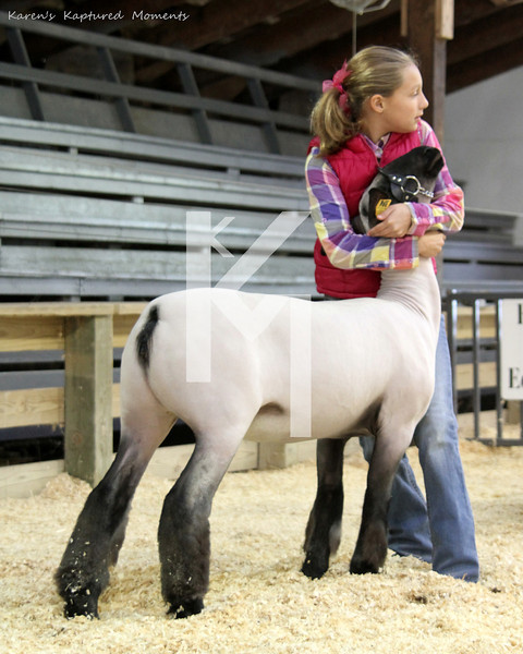 Central Indiana Lamb Show