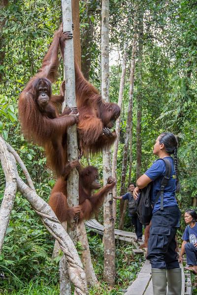Borneo-2228-2.jpg