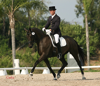 DRESSAGE and Jumping