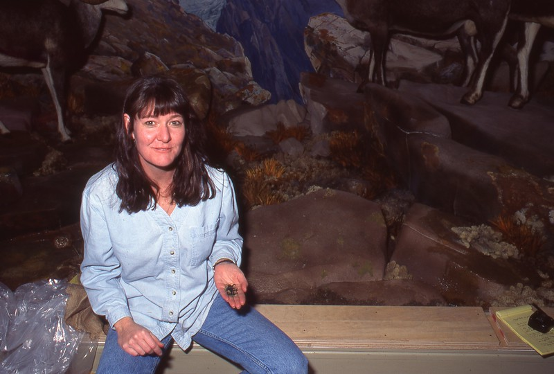 1995_CMNH_North-American-Wildlife-Hall_032.jpg