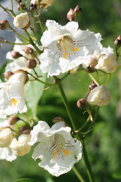 Flower ID.JPG