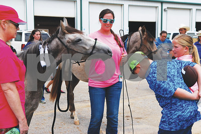 mustangs-move-out-of-the-wild-and-into-their-trainers-hearts