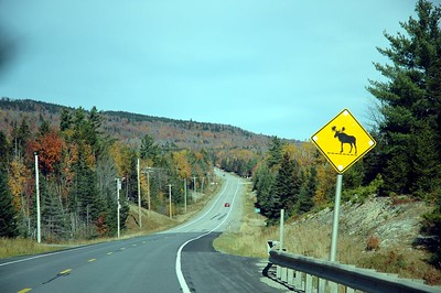 Maine Woods 2004