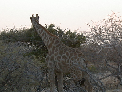 08.28 Etosha National Park, Day 1
