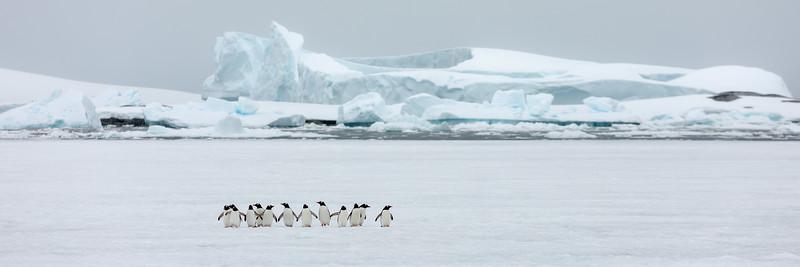 2019_01_Antarktis_04374.jpg