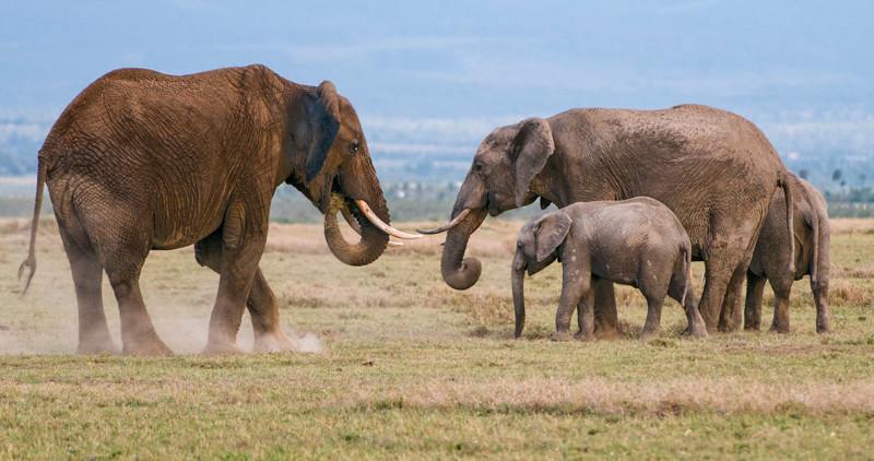Elephants-9.jpg
