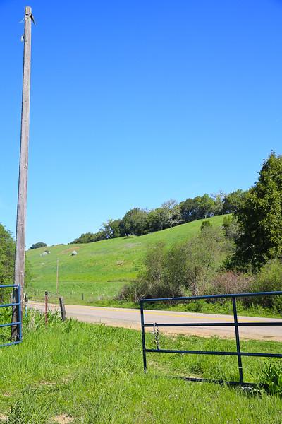 websize_Old Creek Road in Spring-0811.jpg