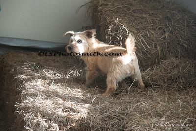 Barn Hunt Sun Pm 10/14