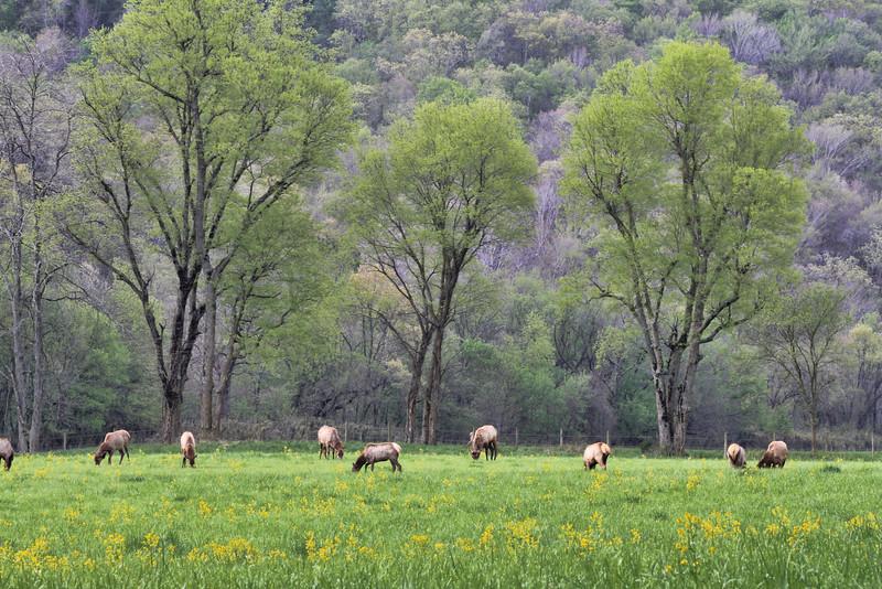 IMG_9069 Boxley Elk.jpg