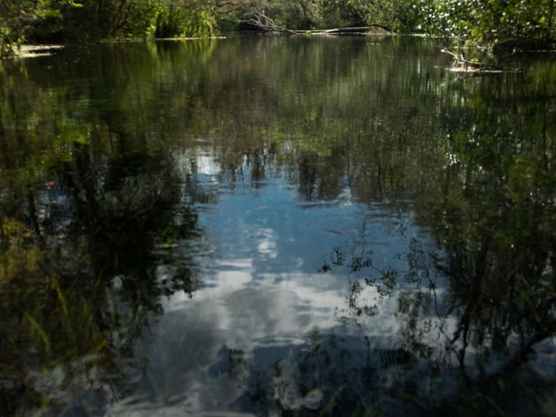 02-23-2019 Ichetucknee River kayak (70 of 78).jpg