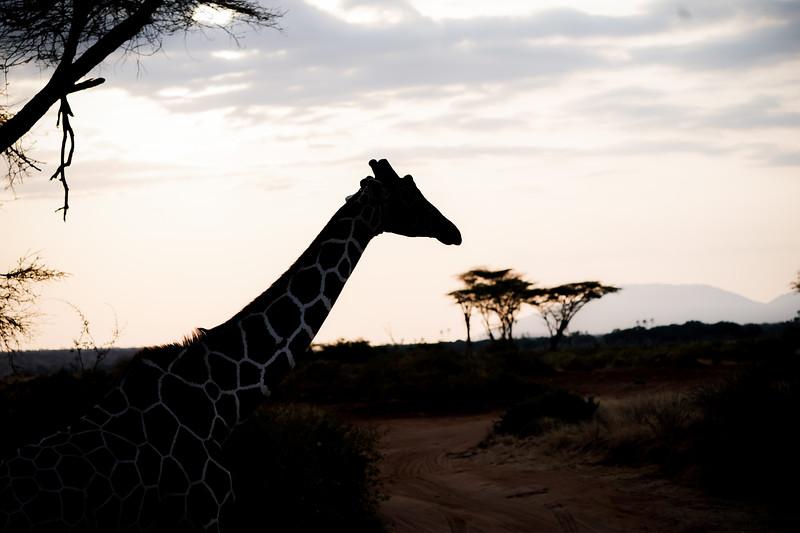 safari-2018-18.jpg