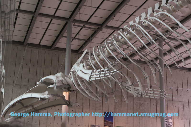 A whale skeleton hangs above the Climate Change area.