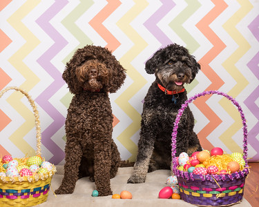 Easter Photos - Furry Tales Rescue