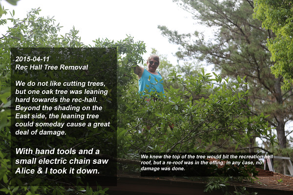 001 Tree Removal