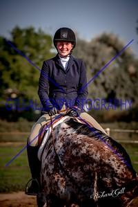 Colorado Stock Horse September 3rd 2017