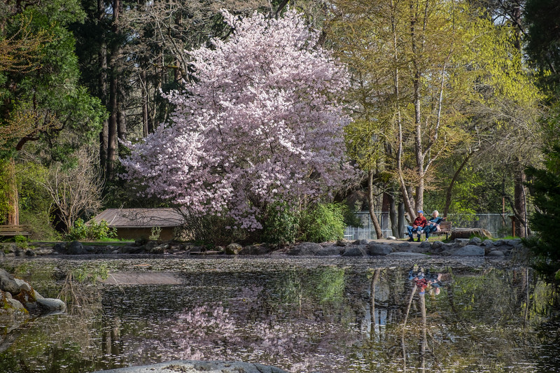 Duck Pond in Lithia Park, Ashland, Oregon