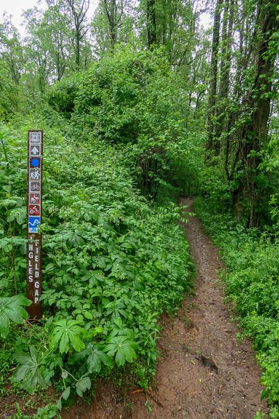 Ingles Field Gap Trail @ Ingles Field Gap -- 2,940'