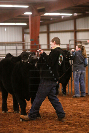 North Texas Show Down Steers Dec. 30, 2012