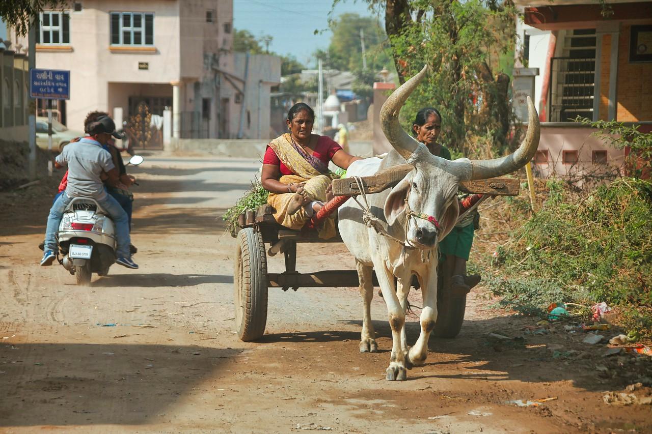 Ahmedabad India bullcart