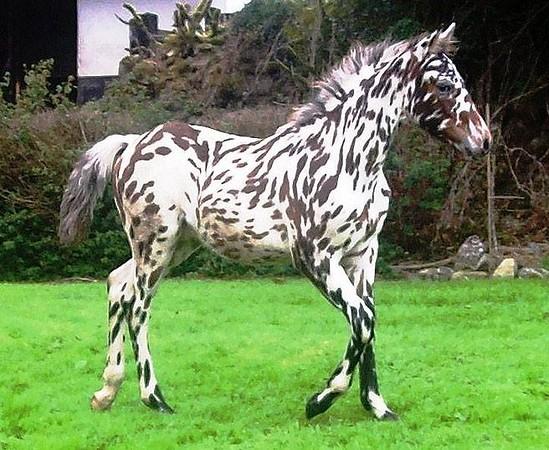 cool horse.jpg