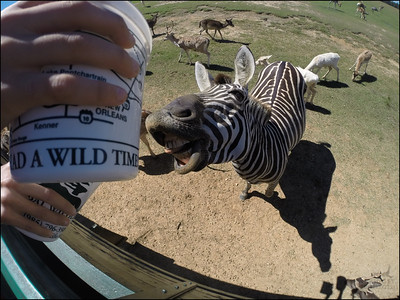 MRA 5th Grade Global Wildlife 2014