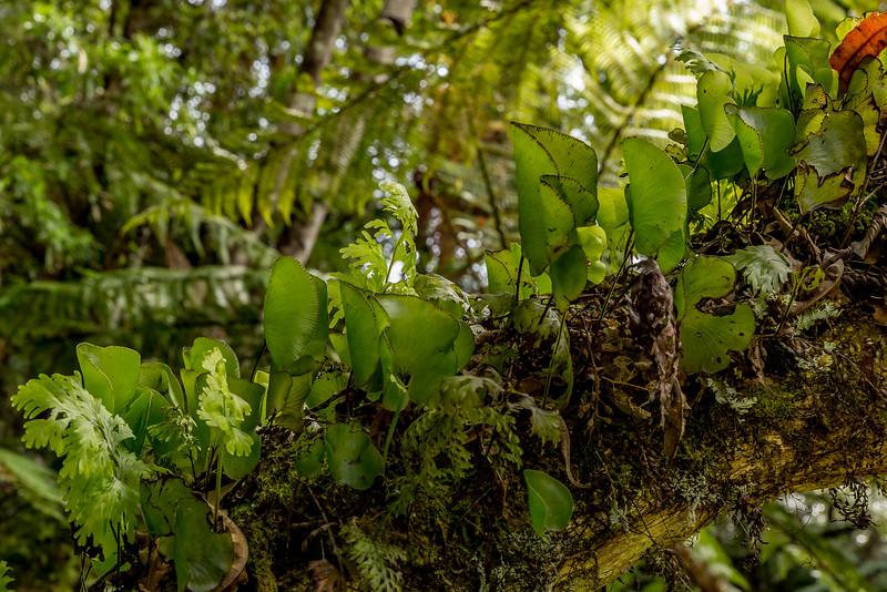 Im Waiau Kauri Grove