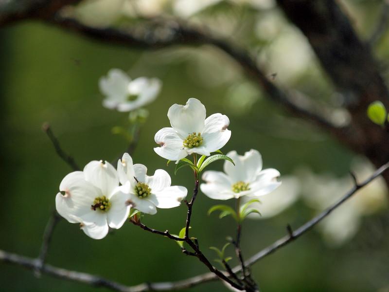 Flowers-006.JPG