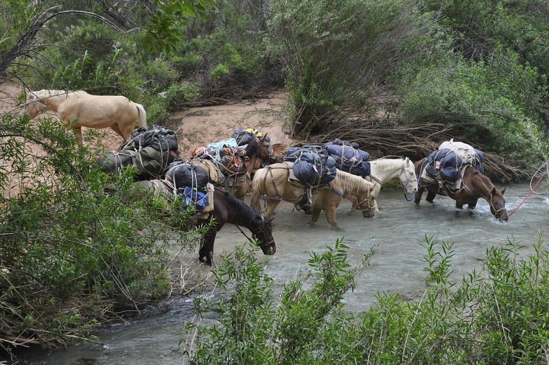 At Havasu River – horses are thirsty…