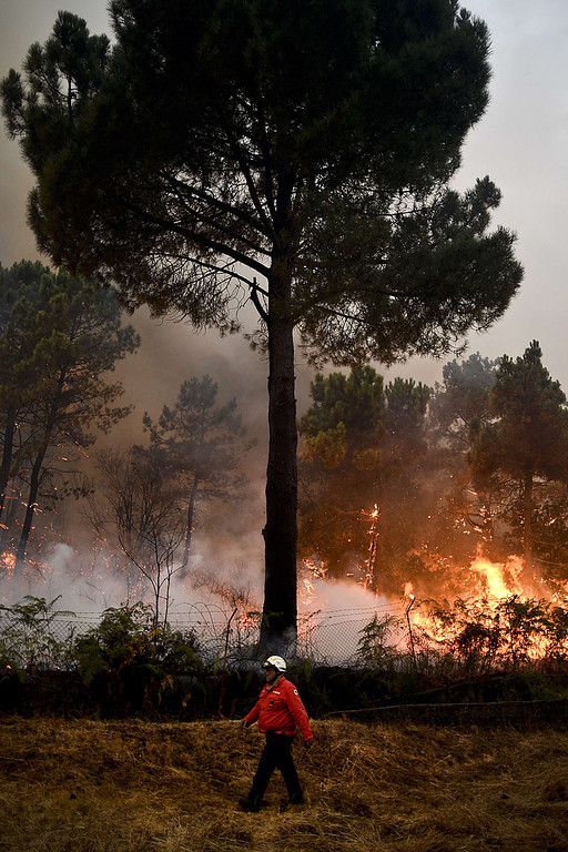 . A firefighter walks past a tree during a wildfire in Caramulo, central Portugal on August 29, 2013.  AFP PHOTO / PATRICIA DE MELO MOREIRA/AFP/Getty Images