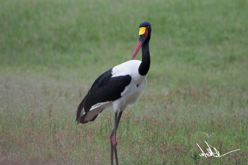 StorksS-2.jpg