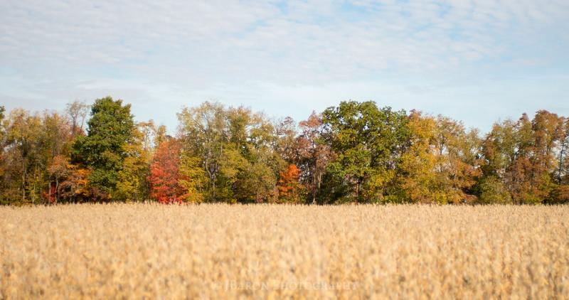 Fall Harvest and Foliage