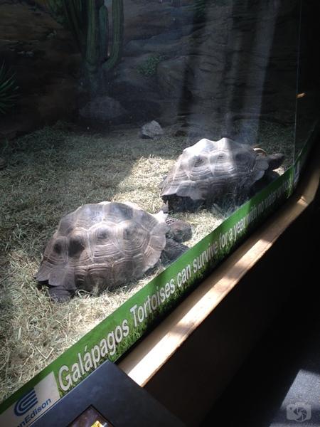 Weissfest 2014 - Staten Island Zoo 14.jpg