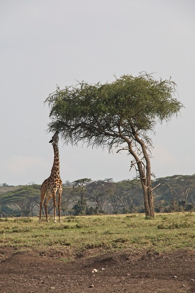 Naboisho Conservancy