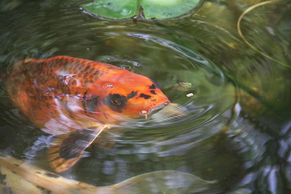 2017-07-03 Pond