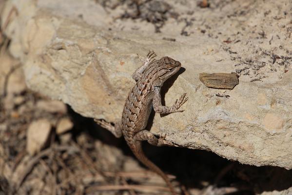 Zion National Park - Observation Point