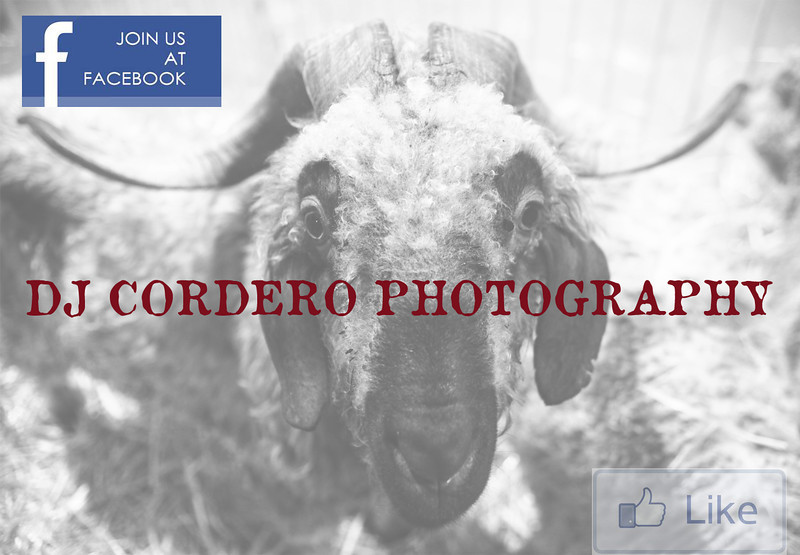 Join us on Facebook2.jpg