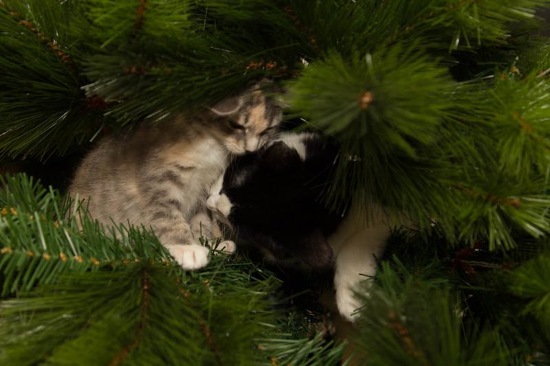 Christmas Day 2012-7090.jpg