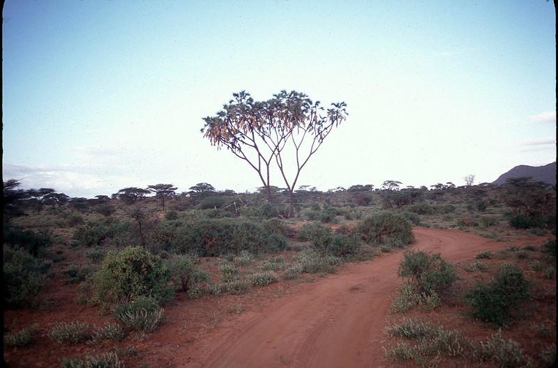 Kenya1_078.jpg