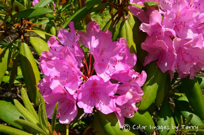 NJ Backyard Flowers-67-21.jpg