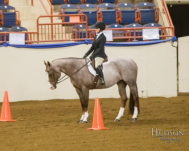 PA State 4H Horse Show