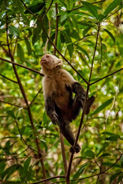 Costa Rica 2016 20160404-15-16-_MG_2454-006-Edit.jpg