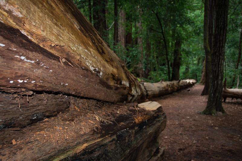 Redwood-70.jpg